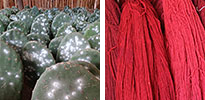 cochineal natural dye